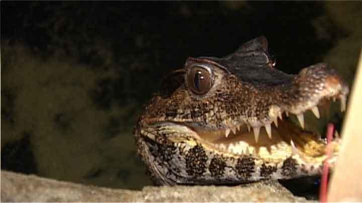 Krokodiller etc.