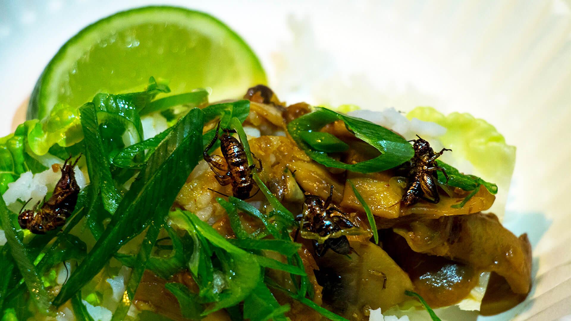 Insekter: Fremtidens føde?