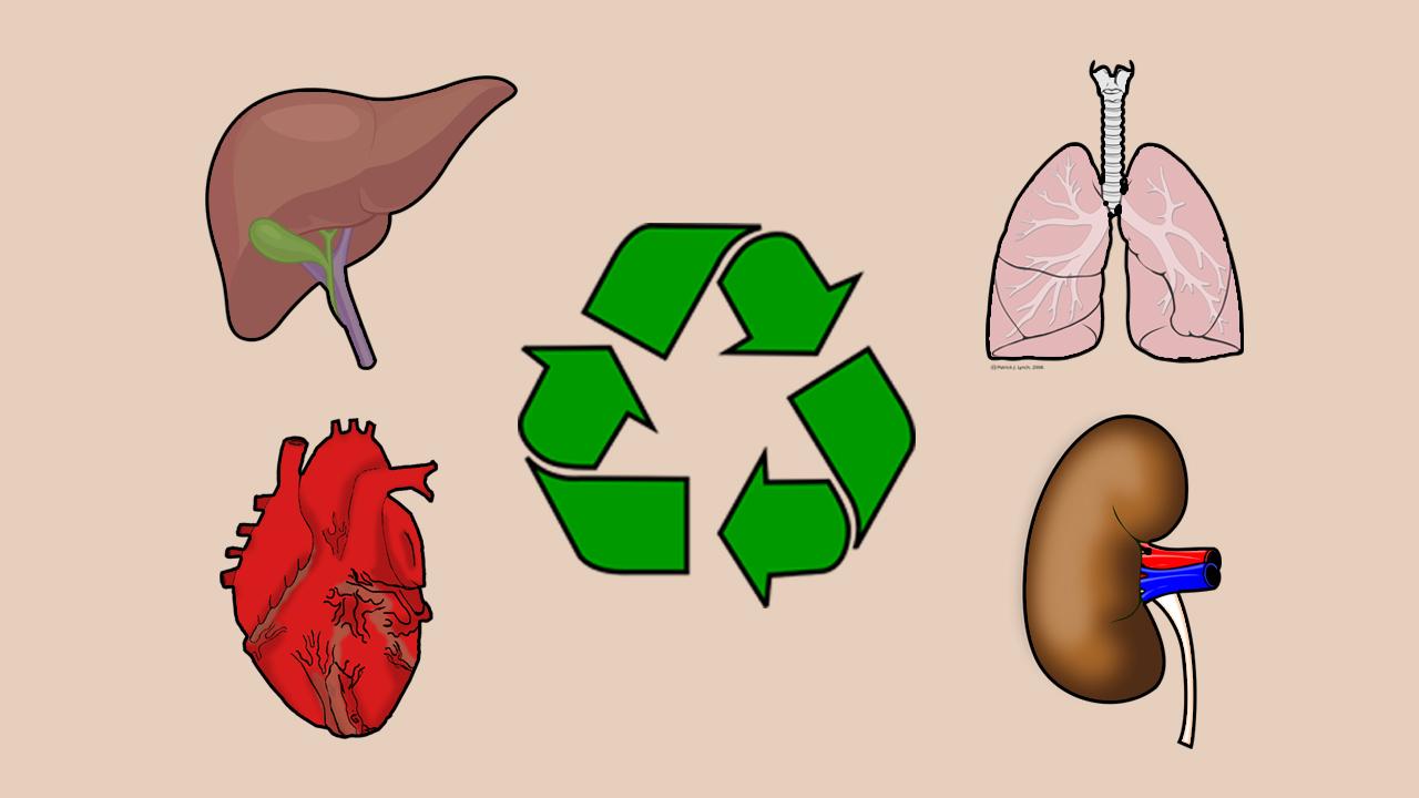 Er du organdonor?
