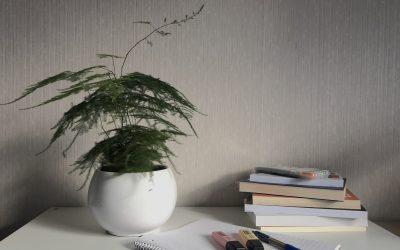 Plantestell i en hektisk studenthverdag